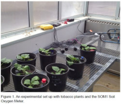 An experiment set up with tobacco plants and the SOM1 Soil Oxygen Meter