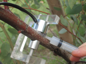 Installed PSY1 Stem Psychrometer on a Eucalyptus