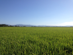Soil Moisture and Remote Sensing Measurements in the Philippines