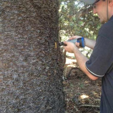 Sap Flow and Monitoring Trees in an Urban Park